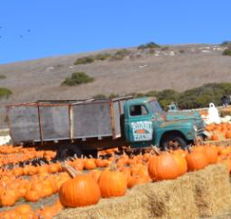 Santa Cruz - Rodoni Farms Pumpkin Patch - 10,11,12OCT14