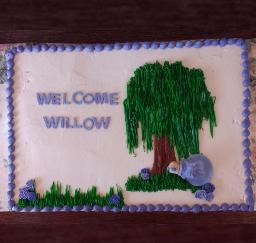 Willow's Baby Shower - 30JAN16