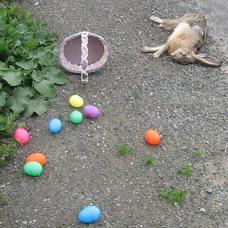 EasterBunnyHitAndRun