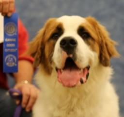 PETSMART - Canine Good Citizen Test - 28DEC13
