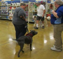 Penny assisting at PetsMart - 27JUL16