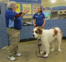 Penny assisting at PetsMart - 31OCT16