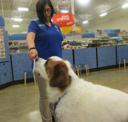 Penny assisting at PetsMart - 16AUG17