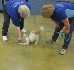 Penny assisting at PetsMart - 06NOV18