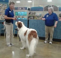 Penny assisting at PetsMart - 11JUL18