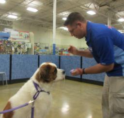 Penny assisting at PetsMart - 08AUG18