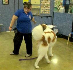 Penny assisting at PetsMart - 11DEC18