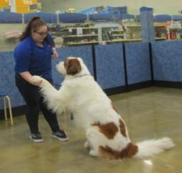 Penny assisting at PetsMart - 09JAN19