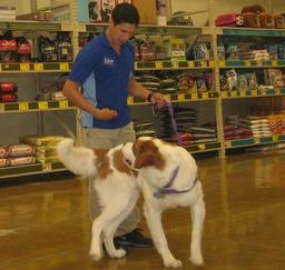 PETSMART - Intermediate Puppy Traing- 30JUL13,...,03SEP13